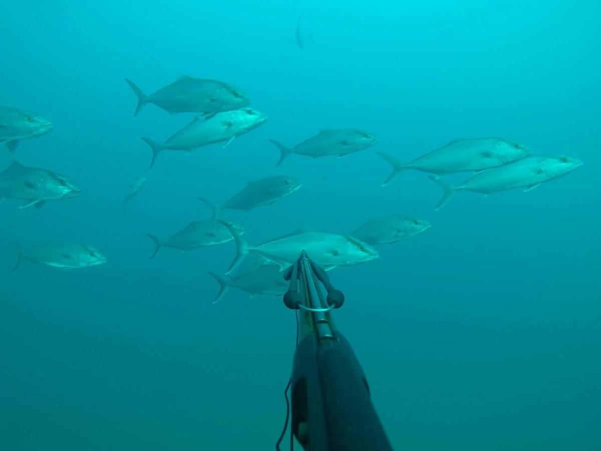 Fort Myers / Sanibel / Captiva Scuba Diving Charters
